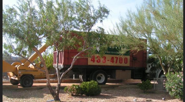 Tree service Las Vegas