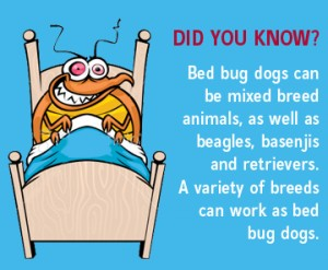What You Need to Know About Bed Bug Dogs