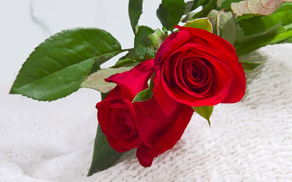 Have Roses Delivered To You Wherever You Are