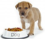 The Importance Of Feeding Your Dog Healthy Food