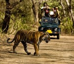 A Trip To Jim Corbett – An Encounter With The Stripped Kind