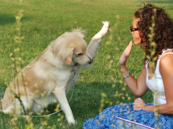 5 Reasons Why Live Is Better When You Teach Your Dog Obedience