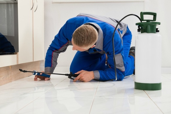 Why You Should Use Professional Pest Control Services Instead Of DIY