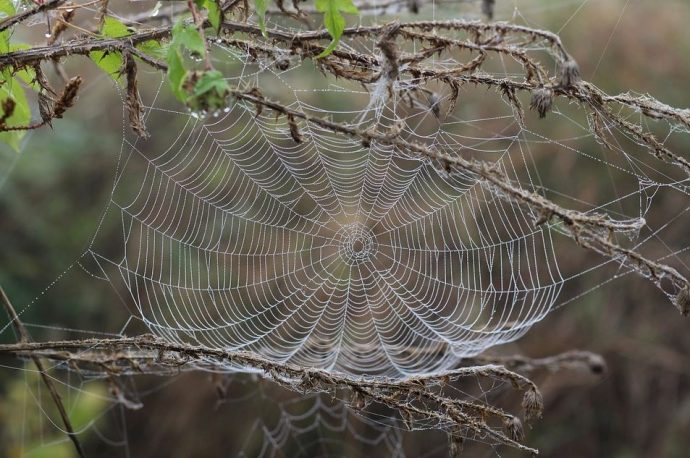 5 Myths About House Spiders