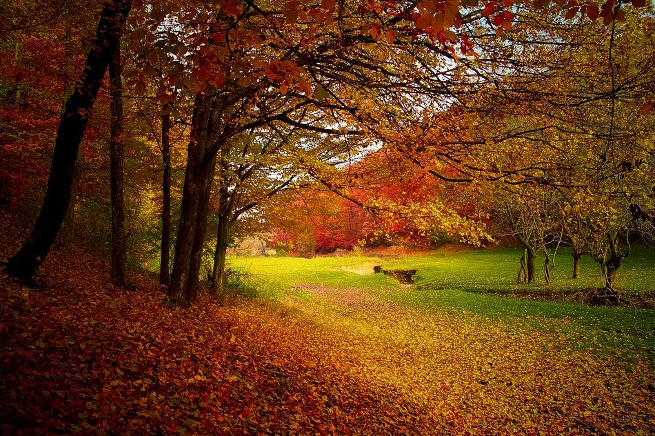 Fall Fertilizer: Why Autumn Is The Best Time To Fertilize