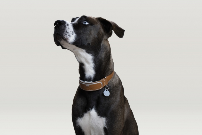 Dog Collar Types Explained
