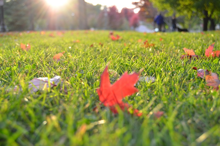 All-Season Care: 4 Benefits Of Year-Round Lawn Care