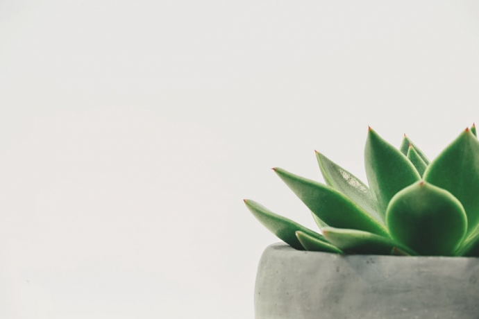 Going Green? How To Transform Your Home Into An Eco-Friendly Space