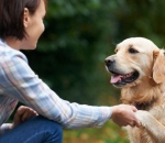 Home Pet Care: How To Keep Your Furry Friends Happy and Healthy