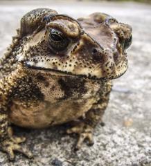 Pesky Pests? 4 Eco-Friendly Options To Consider