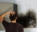 Mold Attacks! 3 Signs You Need Professional Plumbing Repair