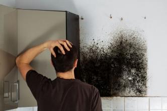 Mold Attacks! 3 Signs You Need Professional Plumbing Repair