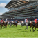 Training For The Big Race – An Insight Into Racehorse Training