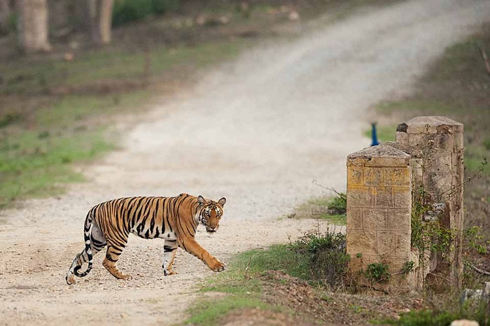 Best Wildlife Sanctuaries In South India