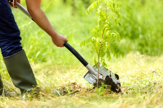 How To Determine Which Plants and Trees To Get Rid Of In Your Yard This Spring