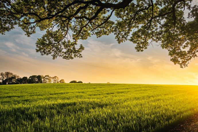 Want To Start A Farm? 4 Steps For Getting Up and Running