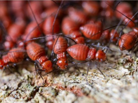 Got Termites? How to Eradicate Them For Good