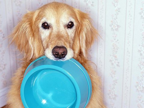 Pet Food Tips - 3 Places To Choose The Best Pet Food For Your Lovely Pet!