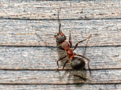 5 Household Pests to Watch For That Can Harm Your Family